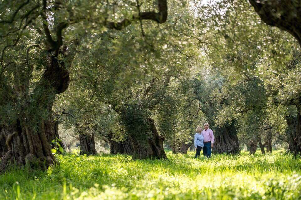 An olive grove with ancient olive trees!
